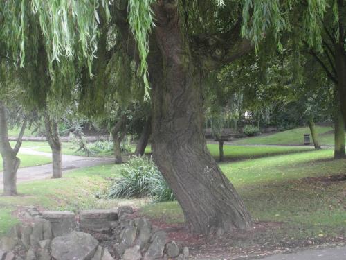 park oasis